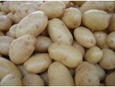POTATOES FROM SEED CHECK ENGINEERING DUTCH KG. 25